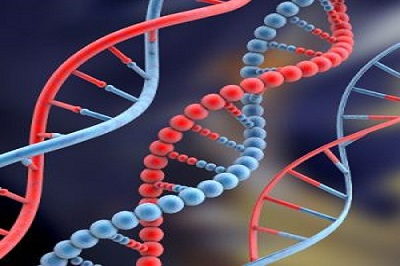 Epigenetics: Switching Your Weight Loss Genes ON and OFF